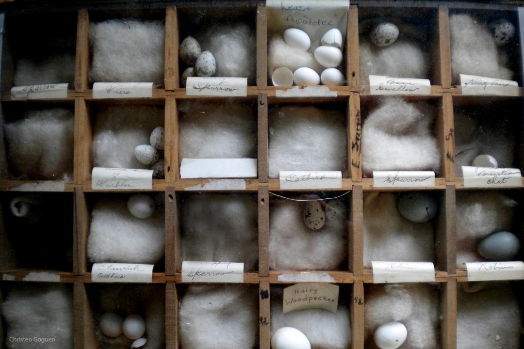 egg display box-cgoguen